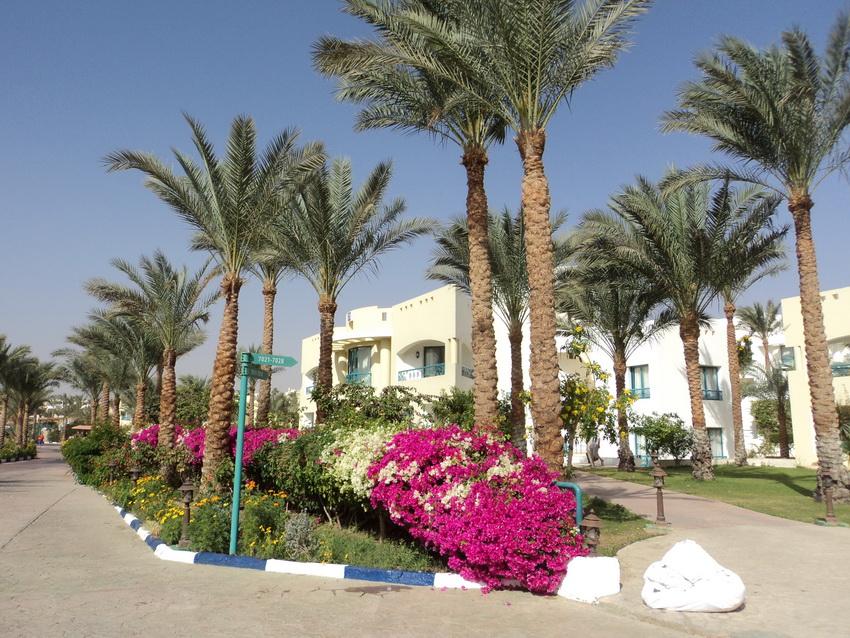 Отзыв об отеле Дессоле Роял Роджана Резорт 5 звёзд в Шарм-эль-Шейхе.
