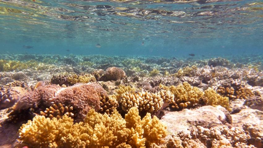 Кораллы на дне