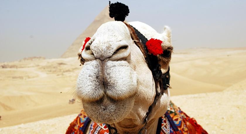 Верблюд в кадре