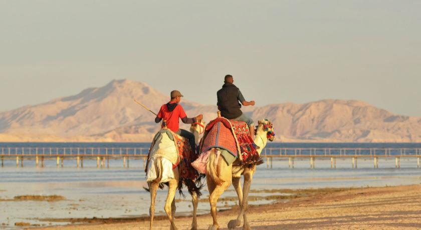Арабы на верблюдах