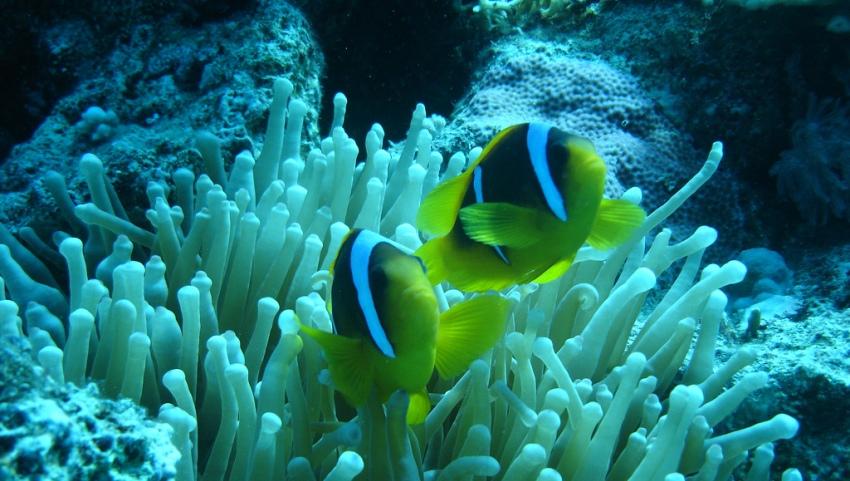 Рыбки на глубине