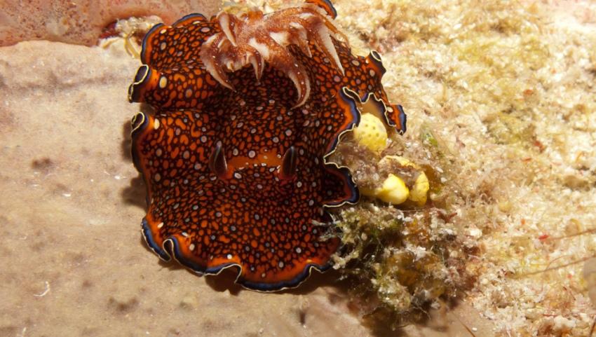 Кораллы.