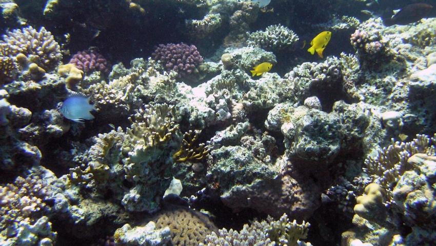 Рифы.