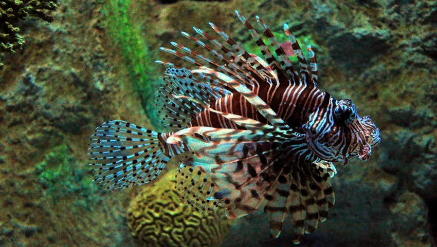 Most poisonous fish in the world