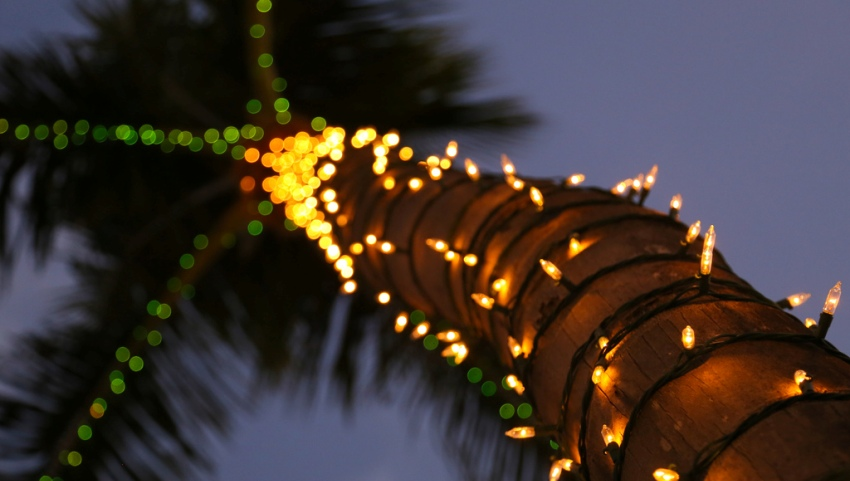 Рождественская пальма.