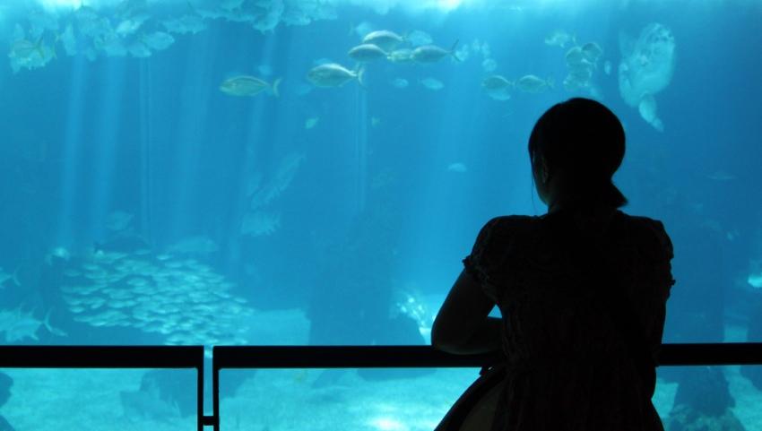 В океанариуме.