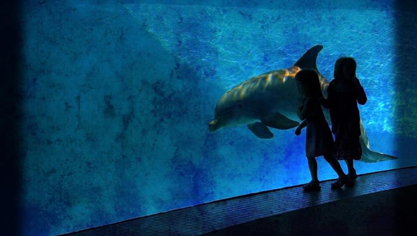 Дети у аквариума.