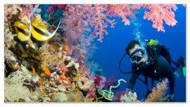 Дайвер и кораллы.
