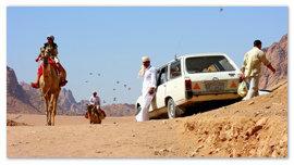Верблюд в пустыне.