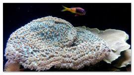 Кораллы и рыбка.