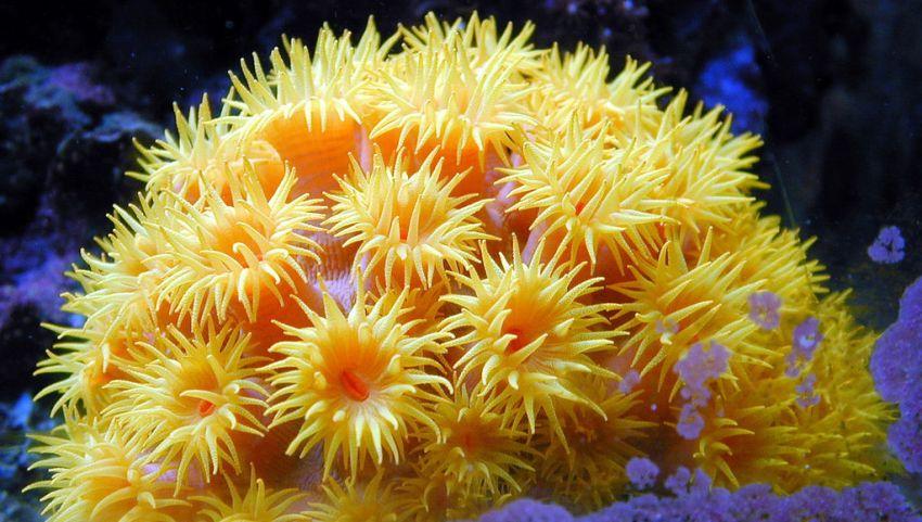 Коралловые рифы.