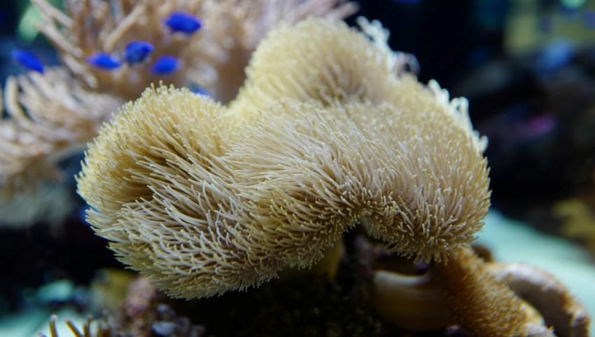 Кораллы ночью.