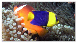 Рыбка в кораллах.