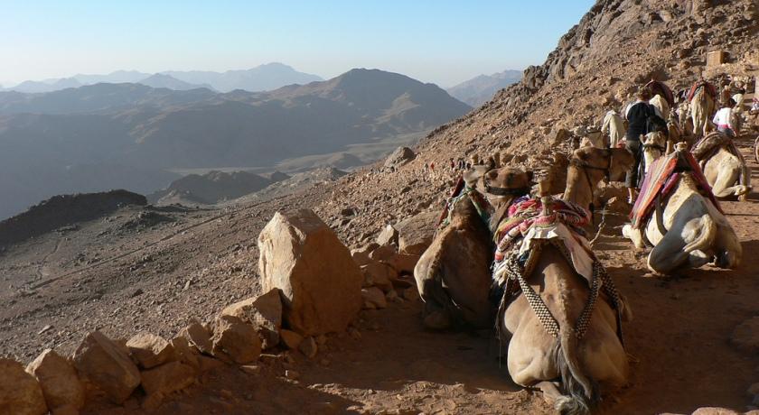 Привал верблюдов.